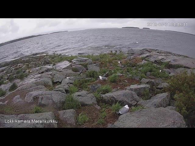 Vuoronvaihto (testivideo)