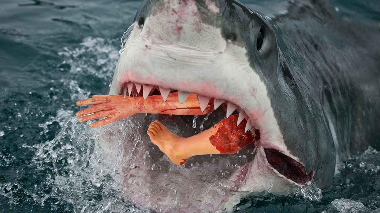 فيلم أسماك القرش المفترسة   كامل ومترجم عربي   HD