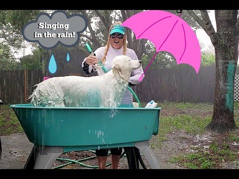 Bathing My Dog In The Rain