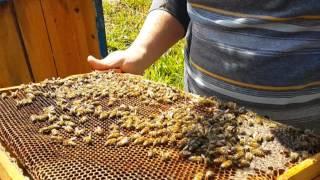 Yunanistan Arıcılığa Çok Büyük Önem Veriyor Arıcılara 14,5 Milyon Avro Destek Primi Verilecek