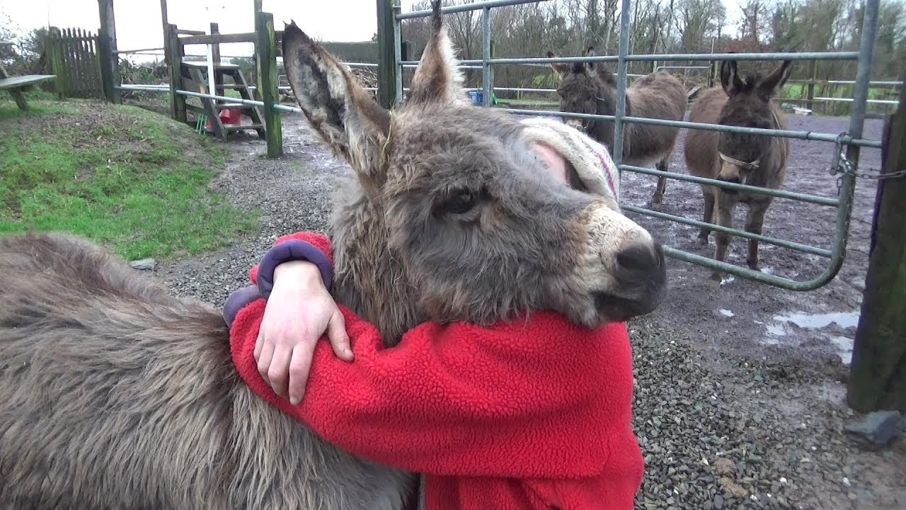 Gordon The Miniature Donkey - Hoofs, Exercise, And Huge Hairy Hugs
