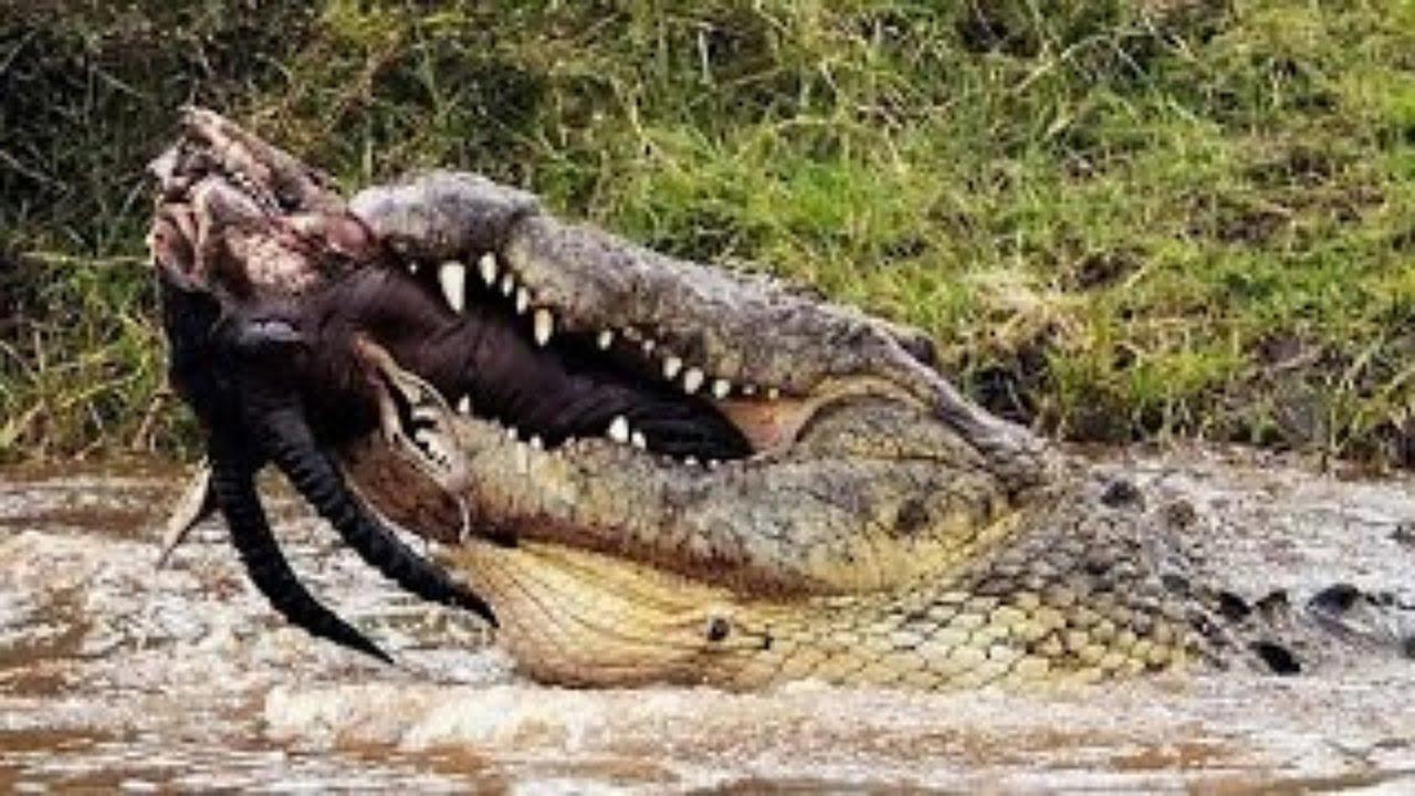 Scary animal attack pictures - photo#5