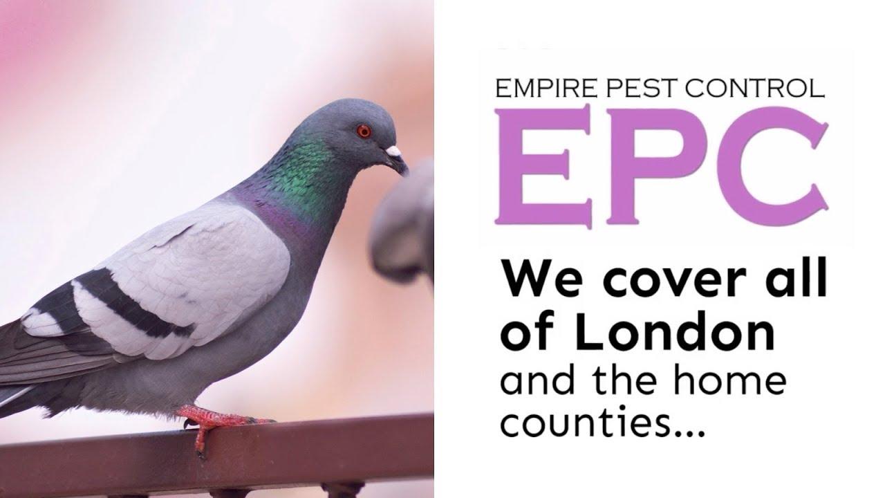 Pigeon Control London Uk Proof Get Rid Of Pigeons Empire Pest