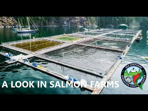 Op Virus Hunter: A Look in Salmon Farms