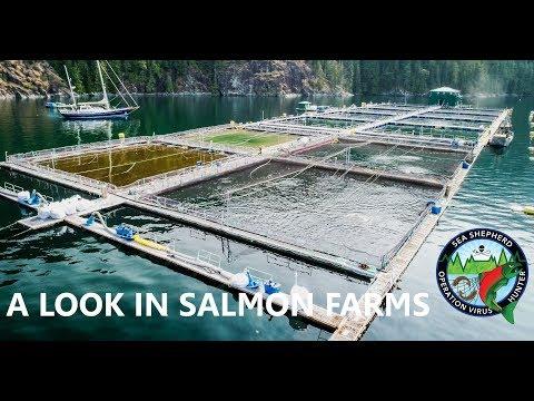 Op Virus Hunter: A Look in Salmon Farms