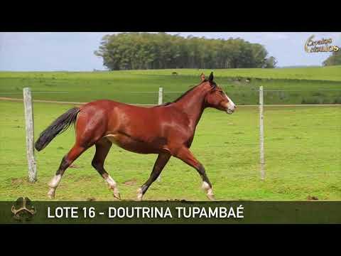 LOTE 16   DOUTRINA TUPAMBAÉ
