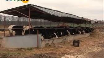 По-високи изкупни цени и субсидии за литър мляко искат фермерите