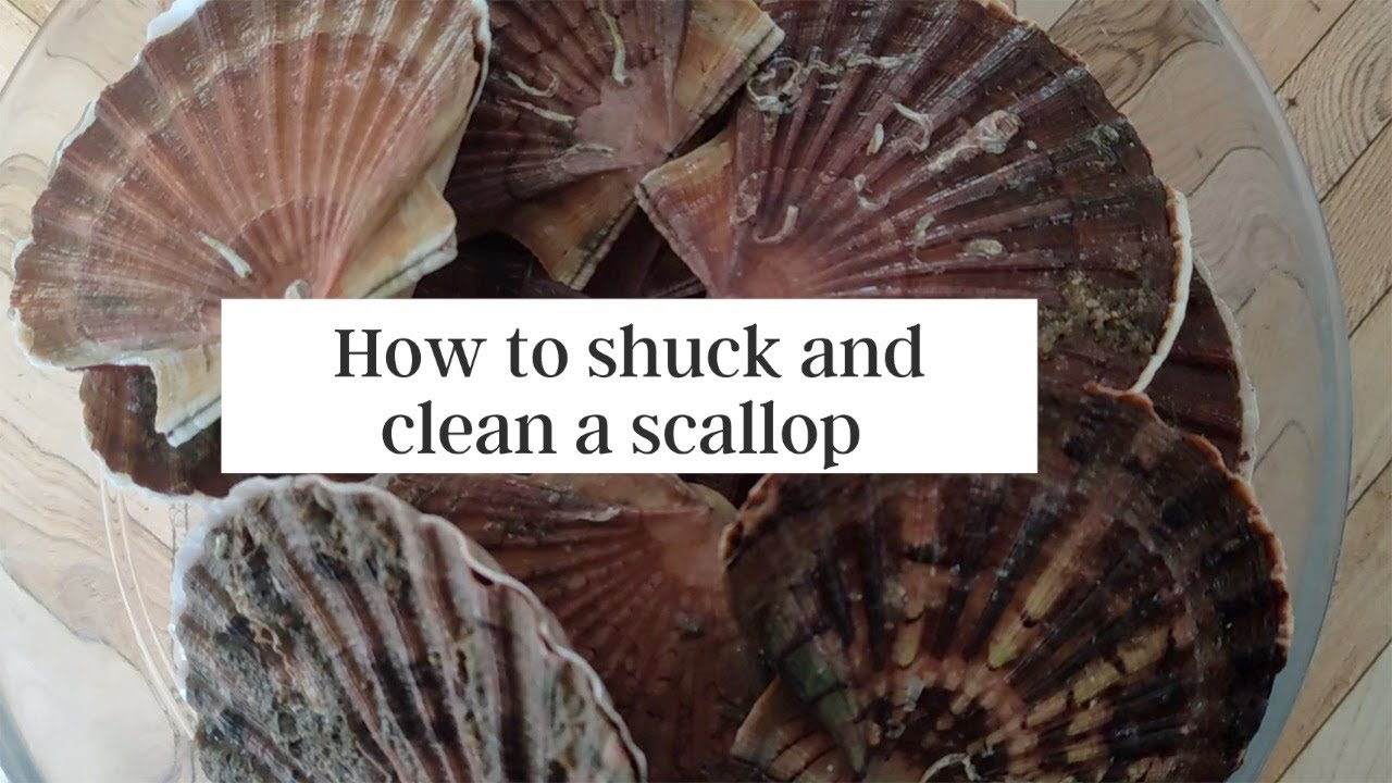 How to Shuck and Clean a Scallop - Tutorial