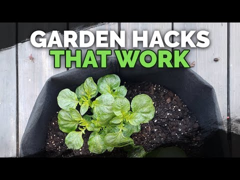 5 Gardening Tips and Ideas that Actually Work