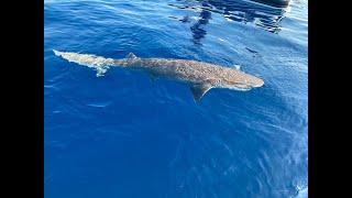 Πάλευαν με Καρχαρία τρία μέτρα για πέραν της ενάμιση ώρας