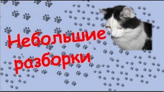 Смешное видео про кошек. Небольшие разборки