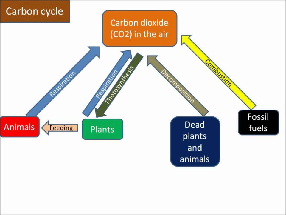 B133 carbon cycle youtube b133 carbon cycle ccuart Image collections
