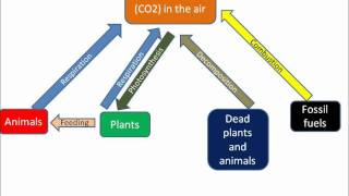 B1.33 Carbon cycle