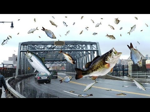 मछलियों की बारिश क्या सच में होता है ? | FISH RAIN FROM SKY - True Or False?
