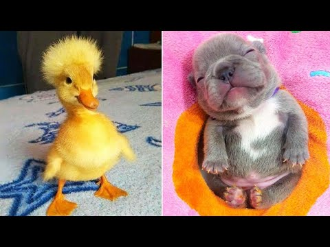 Baby Animals 🔴 Funny Cats and Dogs Videos Compilation (2020) Perros y Gatos Recopilación #2