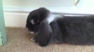 My Bunny Sooty