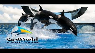 #48 CША. Orlando 2012. Sea World Park. Выступление касаток
