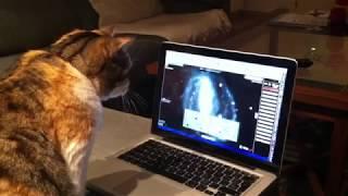 Even cats like ESASky