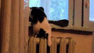 Кот гонит на батарее