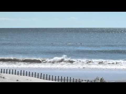 Flipper, der schlaue Delphin