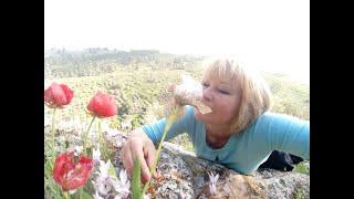 04.04.20.Говорит и показывает природа.Весна на улице- весна в душе! позитив!
