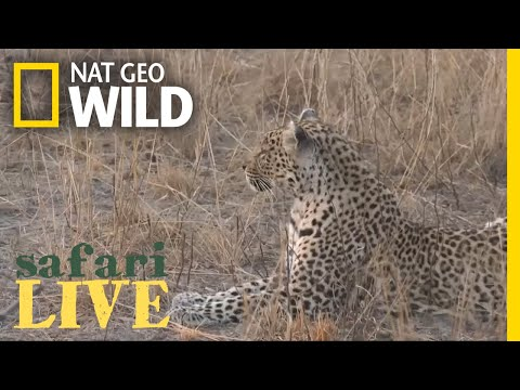 Safari Live - Day 26 | Nat Geo WILD