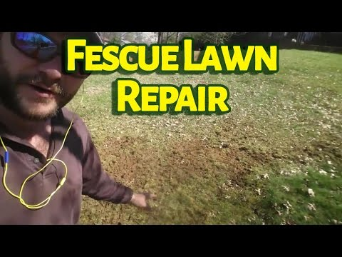 Fescue Lawn Repair - From Moss to Grass