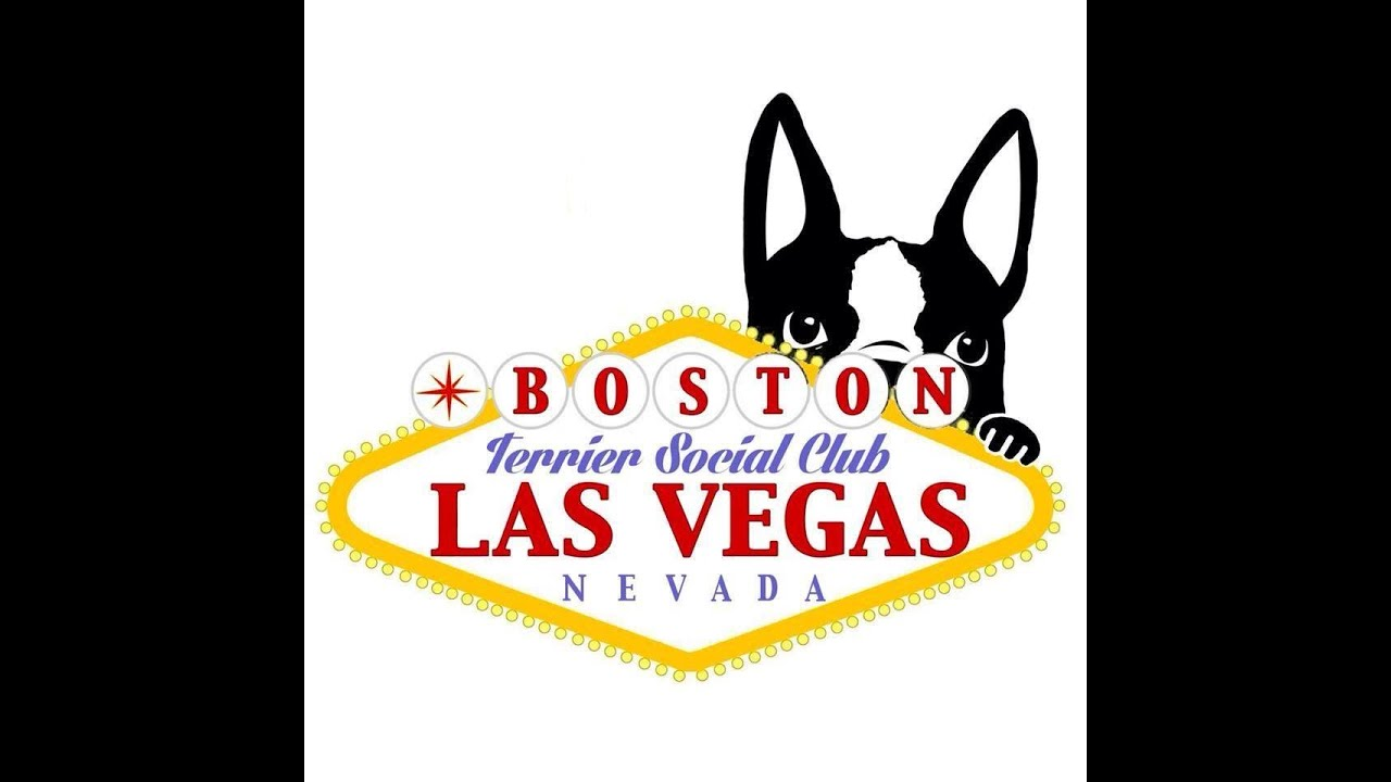 My Boston Terriers Walter & Stella Sunset Park LV - YouTube