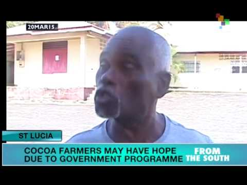 St. Lucia: Cocoa farmers organize to defend their livelihoods