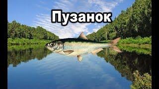 Російська рибалка 3. Пузанок