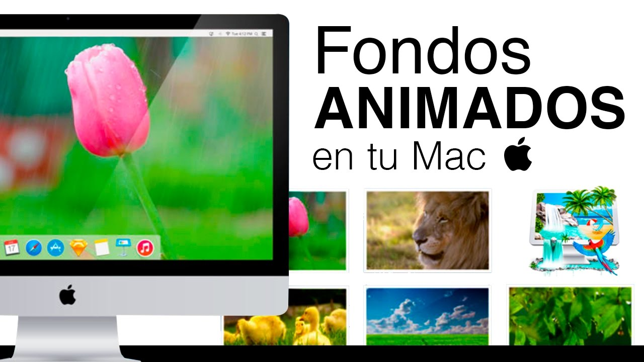 cómo tener fondos de pantalla animados en tu mac youtube