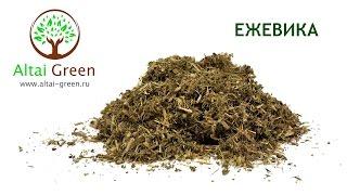 Листья ежевики - Обладающие полезными свойствами листья ежевики, обзор.