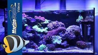 Marine Depot Featured Tank: CAD Lights Artisan 70 Gallon Reef Tank