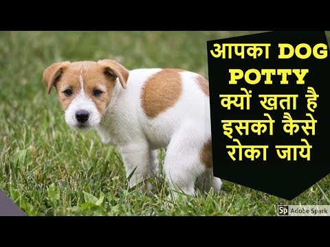 Why Your Dog Eat Potty Or Poop | How To Stop It | Dog Care