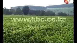 #MagicalScenes: Featuring tourist attractions in Kericho County