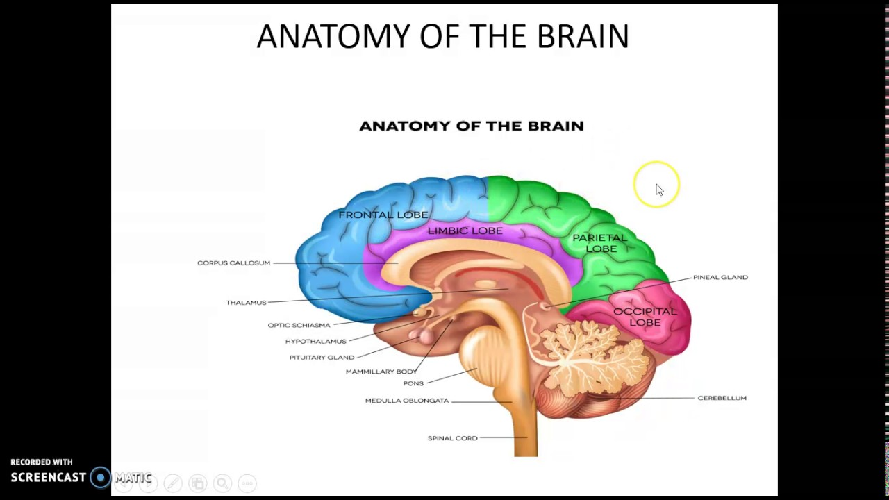 anatomy and physiology of nervous system part 1 - YouTube