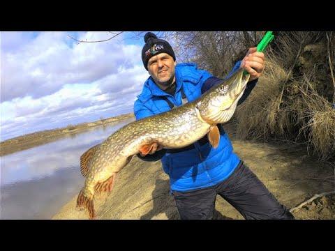 ЩУКА ТРОФЕЙ на спиннинг  НОВЫЙ РЕКОРД! Рыбалка весной Москва река.