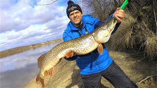 ЩУКА МОНСТР Ловля щуки судака весной Рыбалка на Москва реке на спиннинг