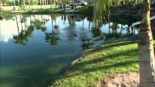 Gator Boys segment: Big Gator, Small Pond s01e01