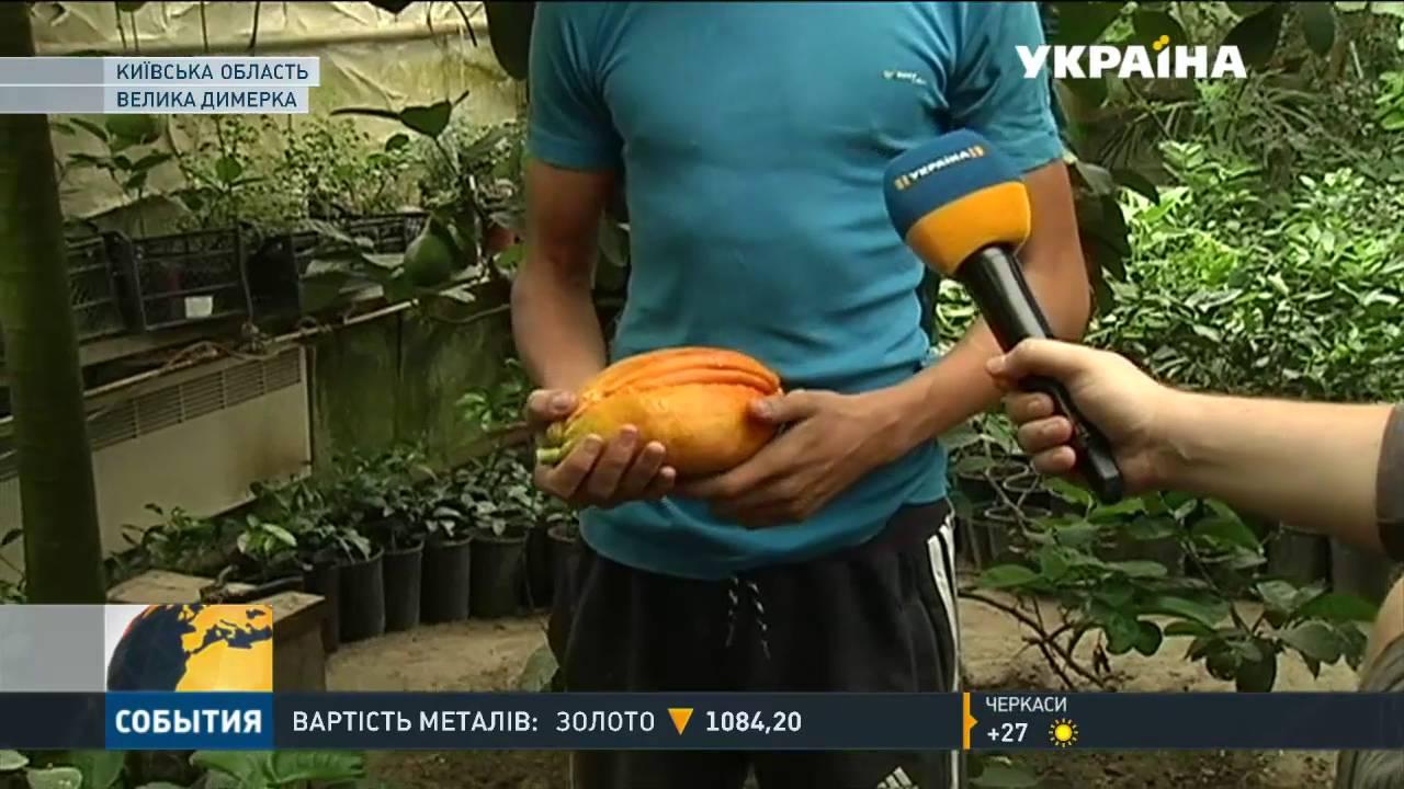 Купить экзотическое растение недорого: большой выбор объявлений продам экзотическое растение бу. На ria. Com есть предложения продажа растение экзотическое дешево в украине, есть цены и фото товаров.