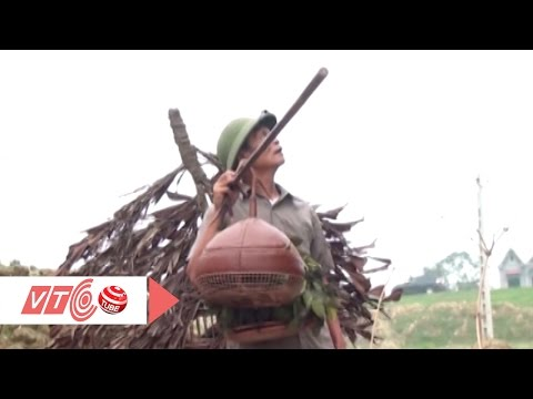 Thú Chơi Chim Cú Gáy Tao Nhã Của Người Việt | VTC