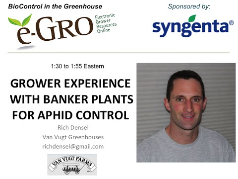 Biocontrol Webinar - Grower Experience with Banker Plants for Apid Control