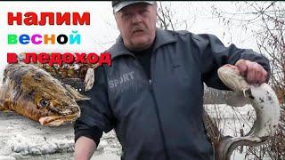 Ледоход на Иртыше, Первая рыбалка