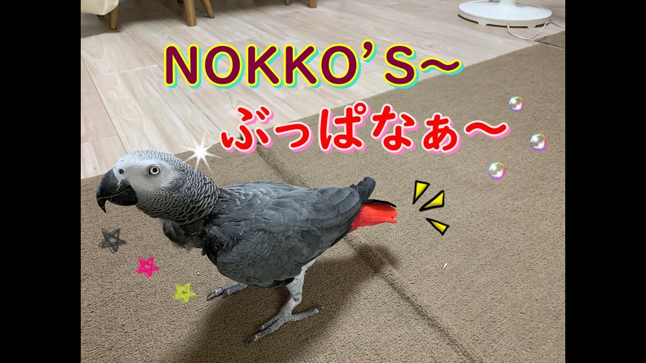 NOKKO'S~ぶっぱなぁ~💖ヨウムのるいちゃん