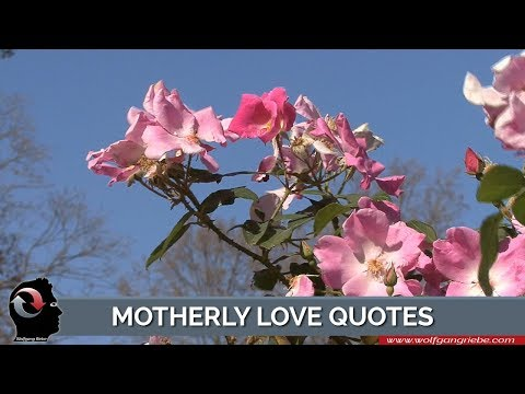 Motherly Love Quotes by Unknown Authors: Wolfgang Riebe