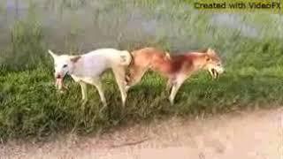 www.dog in romais