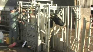 DROVE Vets Farm & Equine care