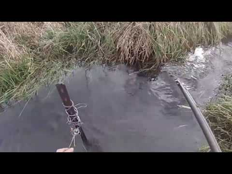 Beaver Trapping with cable restraints in Iowa. Graphic content!!! Dispatch Included