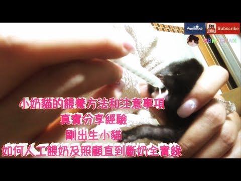 THE CAT SHOW☘️(BBHOCHAN小奶貓的餵養方法和注意事項 真實分享經驗  剛出生小貓,如何人工餵奶及照顧直到斷奶全實錄