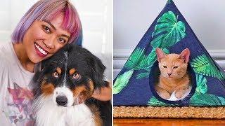 Ideas y Trucos Geniales para Usar Con Tu Mascota | Blossom Español